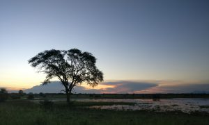 gorongosa_sunset